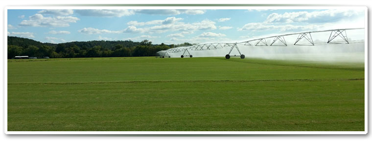 Sunbelt Turf Farms - Calhoun GA